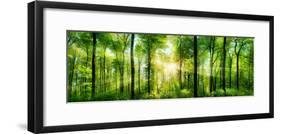 Panorama of a Scenic Forest of Fresh Green Deciduous Trees with the Sun Casting its Rays of Light T-null-Framed Photographic Print
