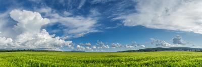 Panorama Ripening Wheat Field-Gennadiy Iotkovskiy-Photographic Print