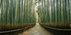 Arashiyama bamboo forest, Kyoto Prefecture, Kinki Region, Honshu, Japan by Panoramic Images