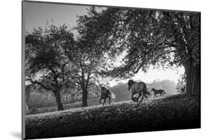 Horses running at sunset, Baden Wurttemberg, Germany by Panoramic Images