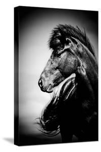 Icelandic Horse, Iceland by Panoramic Images