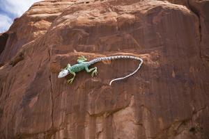 Lizard on surface of rock, Hole 'N the Rock, Zion National Park, Utah, USA by Panoramic Images