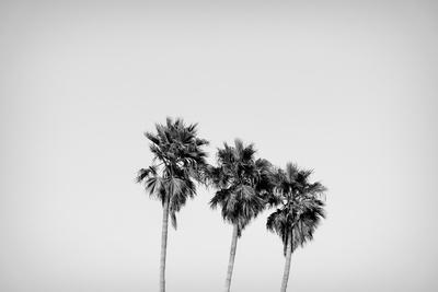 Low angle view of three palm trees, California, USA
