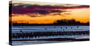 MARCH 8, 2017 - Grand Island, Nebraska -PLATTE RIVER, UNITED STATES Migratory water fowl and San... by Panoramic Images