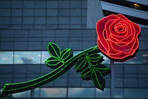 Neon rose, Waterfront Park, Portland, Oregon, USA by Panoramic Images