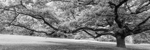 Old tree in park, Stuttgart, Baden Wurttemberg, Germany by Panoramic Images