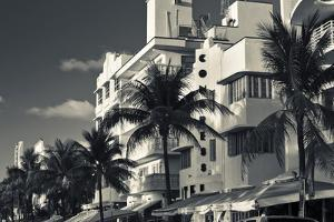 Palm trees in front of art Deco hotels, Ocean Drive, South Beach, Miami Beach, Miami-Dade County... by Panoramic Images