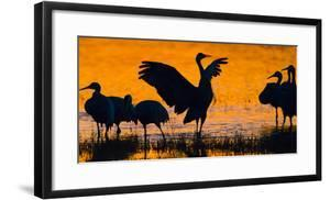 Silhouette of sandhill crane, Soccoro, New Mexico , USA by Panoramic Images