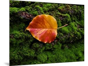 Single autumn leaf lying on moss by Panoramic Images