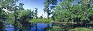Swamp in forest, Jean Lafitte National Park, New Orleans, Louisiana, USA by Panoramic Images