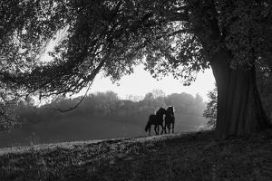 Two horses at sunset, Baden Wurttemberg, Germany by Panoramic Images