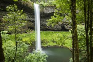 Waterfall in a forest, Samuel H. Boardman State Scenic Corridor, Pacific Northwest, Oregon, USA by Panoramic Images