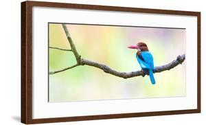 White-throated kingfisher (Halcyon smyrnensis) on tree branch, India by Panoramic Images