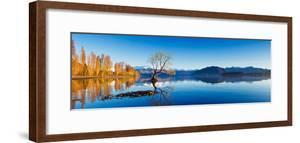 Panoramic Landscape Photograph of the Lone Tree at Lake Wanaka in the South Island of New Zealand.