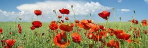 Panoramic Landscape with Poppies and Clouds
