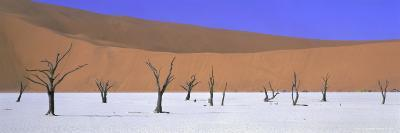 Panoramic View of Dead Trees and Orange Sand Dunes, Dead Vlei, Namib Desert, Namibia, Africa-Lee Frost-Photographic Print