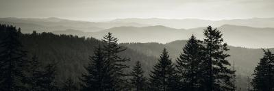 Panoramic View of Trees, Great Smoky Mountains National Park, North Carolina, USA--Photographic Print