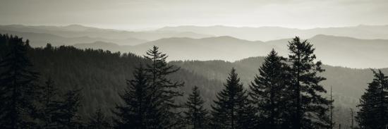 Panoramic View of Trees, Great Smoky Mountains National Park, North Carolina, USA--Photographic Print