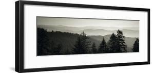 Panoramic View of Trees, Great Smoky Mountains National Park, North Carolina, USA
