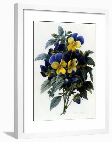 Pansies-Pierre-Joseph Redout?-Framed Giclee Print