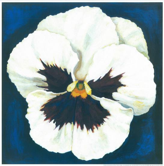Pansy White-Urpina-Art Print