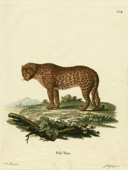 Panther--Giclee Print