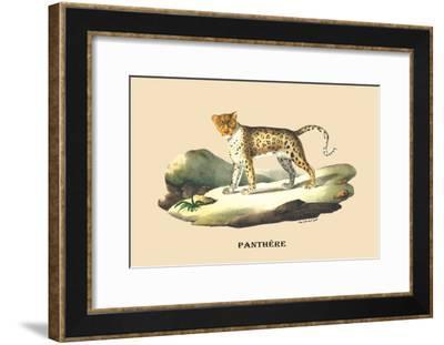 Panthere-E.f. Noel-Framed Art Print