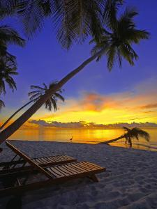 Deckchair on Tropical Beach by Palm Tree at Dusk and Blue Heron, Maldives, Indian Ocean by Papadopoulos Sakis