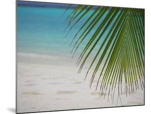 Palm Tree Leaf and Tropical Beach, Maldives, Indian Ocean by Papadopoulos Sakis