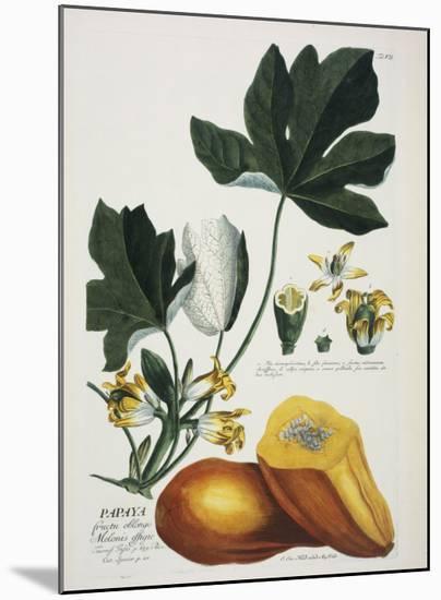 Papaya-Georg Dionysius Ehret-Mounted Giclee Print