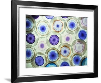 Paper Chromatograms of Various Dyes-Geoff Tompkinson-Framed Photographic Print
