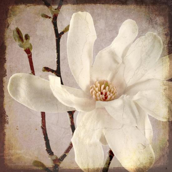 Paper Magnolia Closeup-LightBoxJournal-Giclee Print