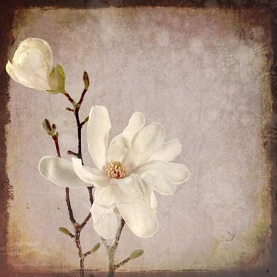 https://imgc.artprintimages.com/img/print/paper-magnolia-duo_u-l-q12v6s80.jpg?p=0