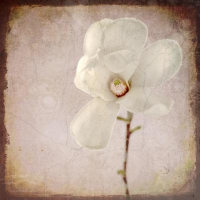 https://imgc.artprintimages.com/img/print/paper-magnolia_u-l-q12v7050.jpg?p=0