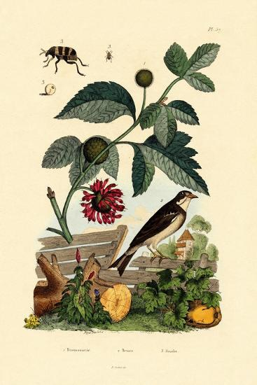 Paper Mulberry, 1833-39--Giclee Print