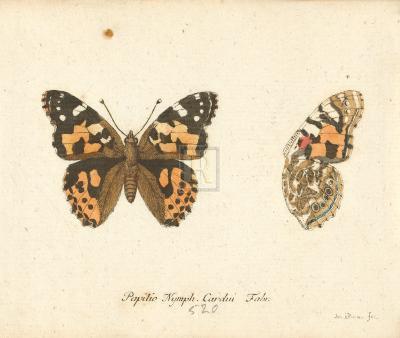 Papilio Nymph Cardui-A^ Poiteau-Premium Giclee Print