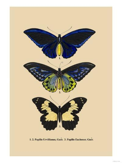 Papilio Urvillianus, Guer--Art Print
