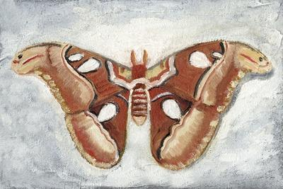 https://imgc.artprintimages.com/img/print/papillon-de-nuit-i_u-l-q1ea0ek0.jpg?p=0