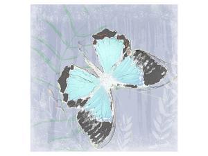 Papillon XI
