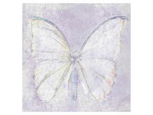 Papillon XlV