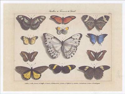Papillons I-Pascal Cessou-Art Print