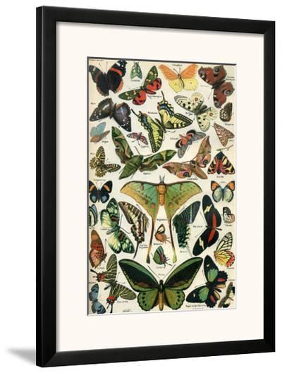 Papillons--Framed Art Print