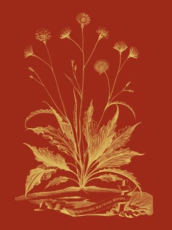 https://imgc.artprintimages.com/img/print/paprika-bouquet-iii_u-l-p8ll5p0.jpg?p=0