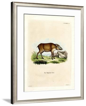 Papuan Wild Boar--Framed Giclee Print