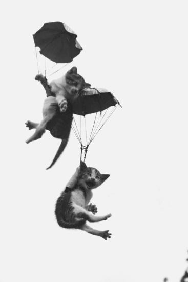Parachuting Kittens--Photographic Print