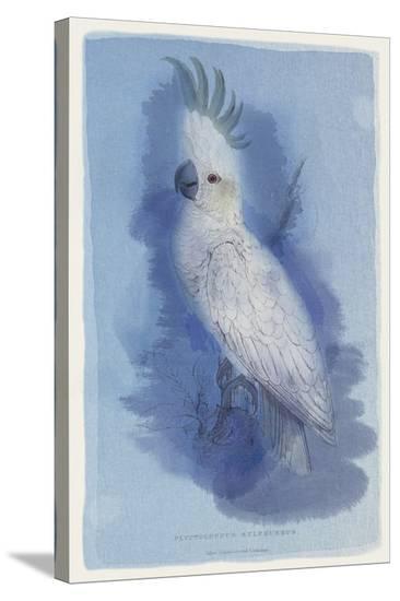 Paradise Blue II-Maria Mendez-Stretched Canvas Print