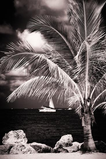 Paradise Palm Tree with a Sailboat on the Ocean - Florida-Philippe Hugonnard-Photographic Print