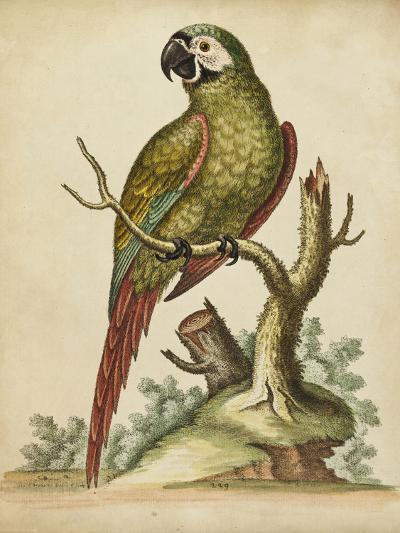 Paradise Parrots II-George Edwards-Art Print
