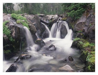 Paradise River cascade, Mt Rainier National Park, Washington-Tim Fitzharris-Art Print