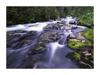 Paradise River, Mt Rainier National Park, Washington-Tim Fitzharris-Art Print